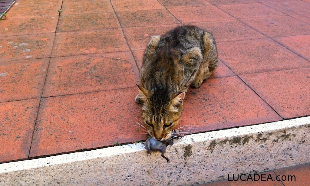 gatto con topo in bocca