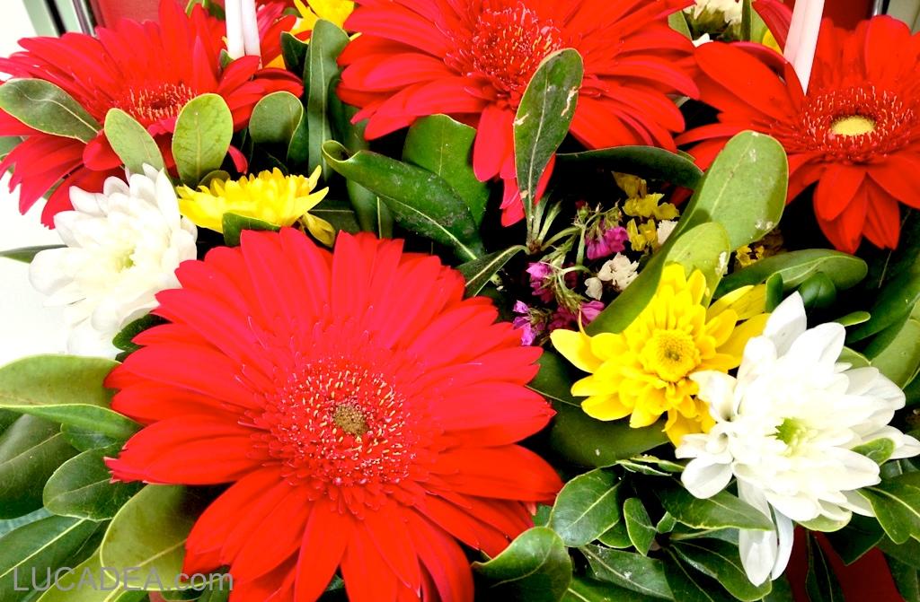 fiori_vari