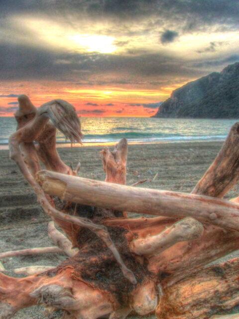 legna su spiaggia
