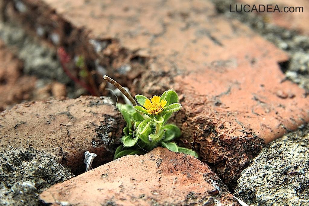 fiore tra i mattoni