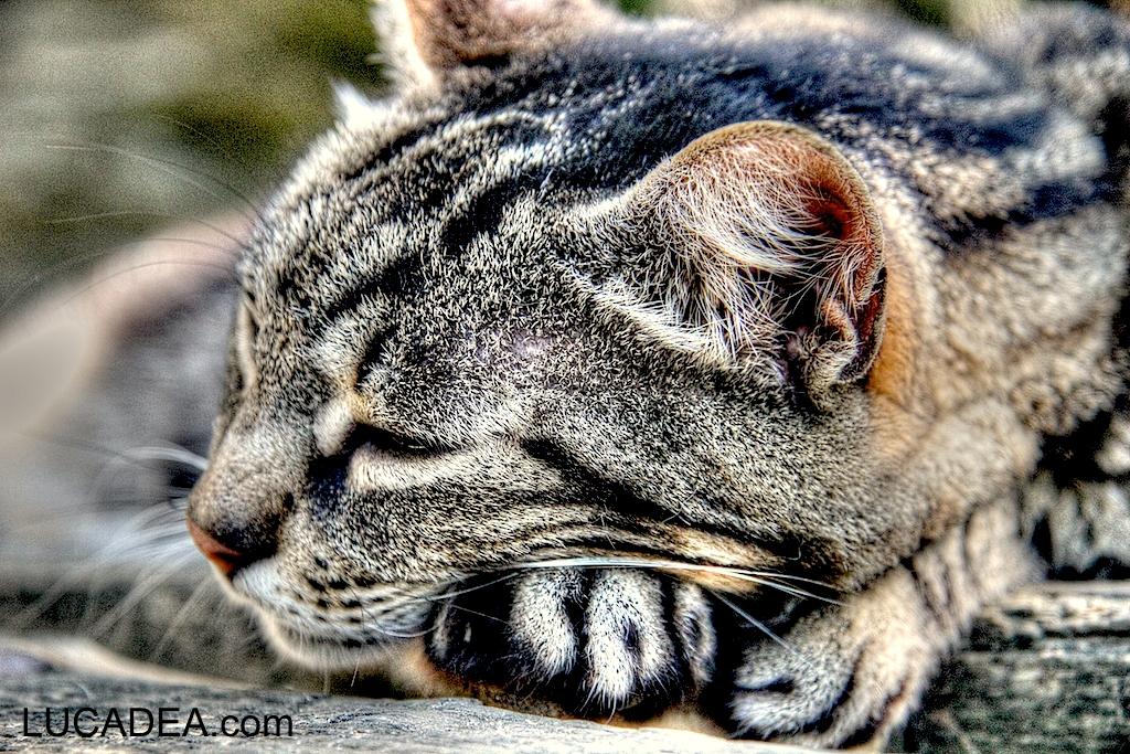 gatto vernazza