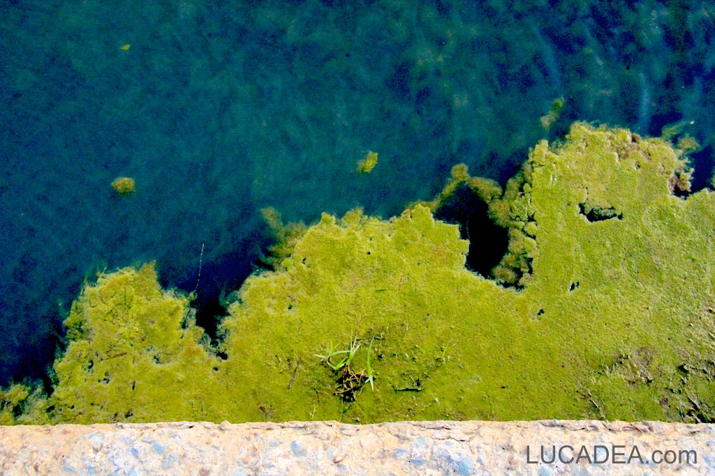 alghe fiume