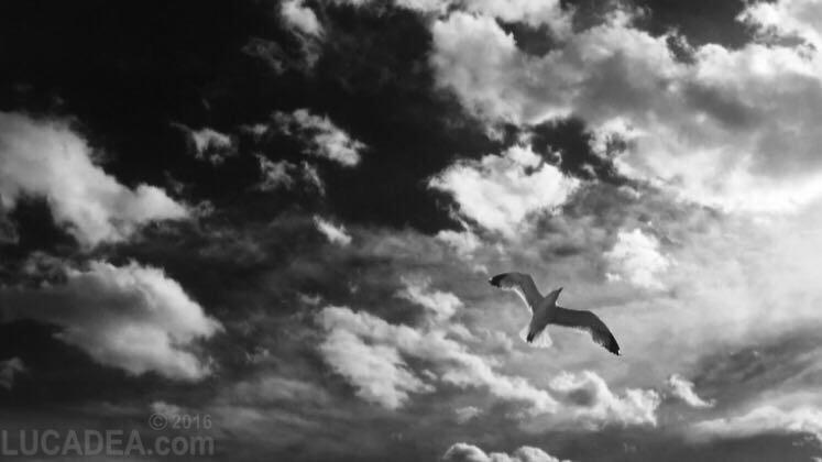 gabbiano-nuvole