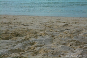 isla_contoy_03