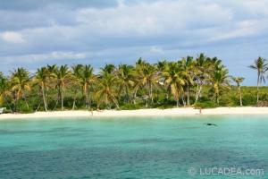 isla_contoy_11