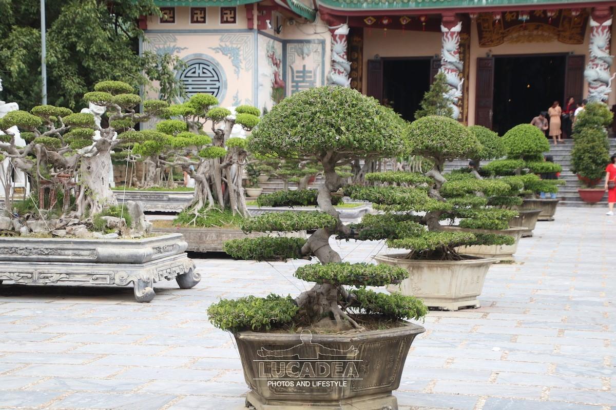 Tho-Quang-17