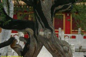 pechino_060