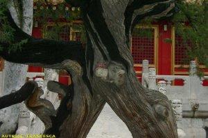 pechino_061
