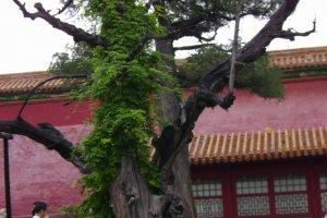 pechino_076