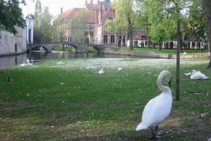 Bruges41
