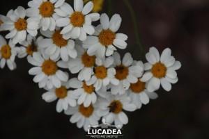 Sentiero-Libiola-Case-Gromolo-31