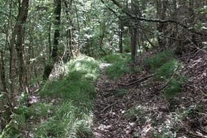 Sentiero-Libiola-Case-Gromolo-37