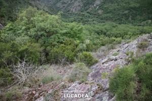 Sentiero-Libiola-Case-Gromolo-49