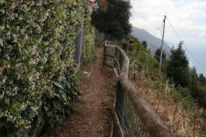 Sentiero-Riomaggiore-Portovenere-14