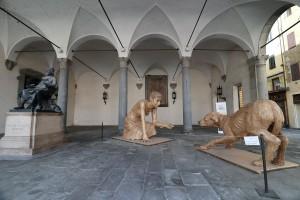 Lucca-66