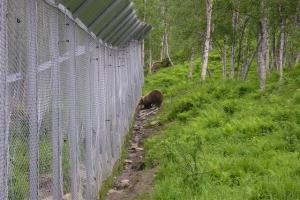 158 - Polar Zoo
