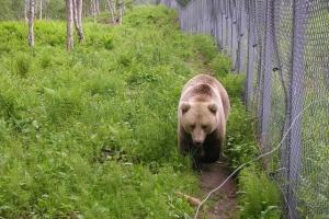 160 - Polar Zoo