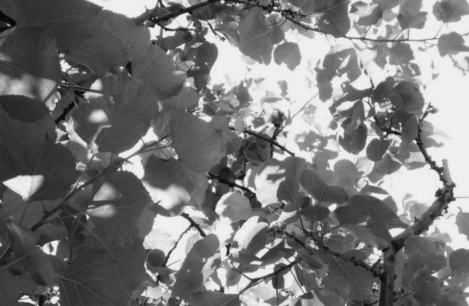 foglie controluce
