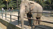 Tutti allo zoo (foto)