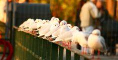 Gabbiani a riposo (foto)