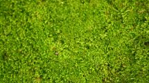 Il verde nel bosco (foto)
