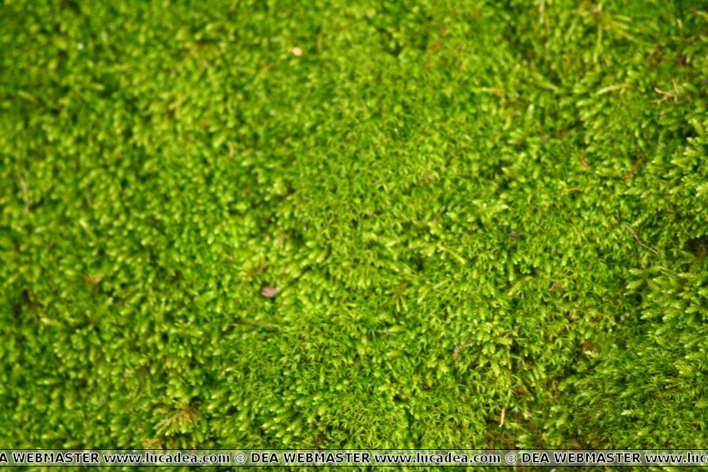 Il verde nel bosco