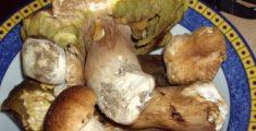 Immagini di funghi freschi appena raccolti