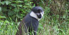 Foto del Rwanda