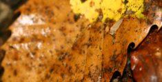 Foglie secche sul terreno (foto macro)