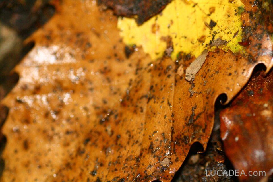 foglie secche macro