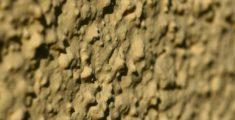 Muro (foto macro)