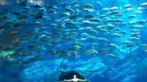 L'acquario con la vasca più grande del mondo (foto)