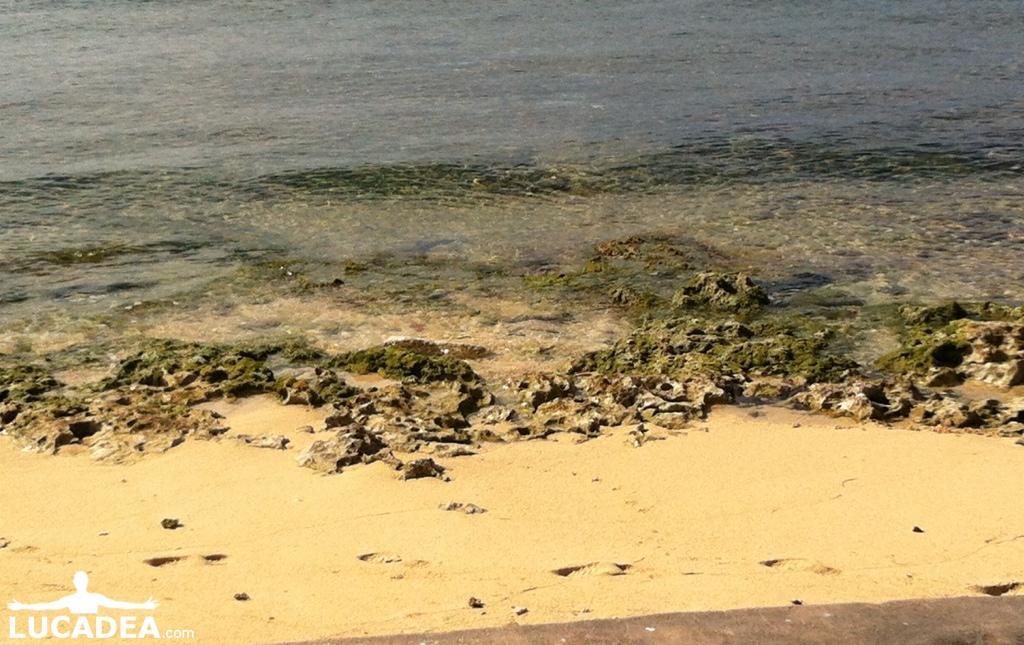 Spiaggia corallina