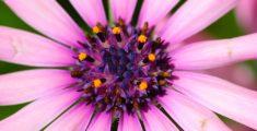 Fiore rosa da vicino