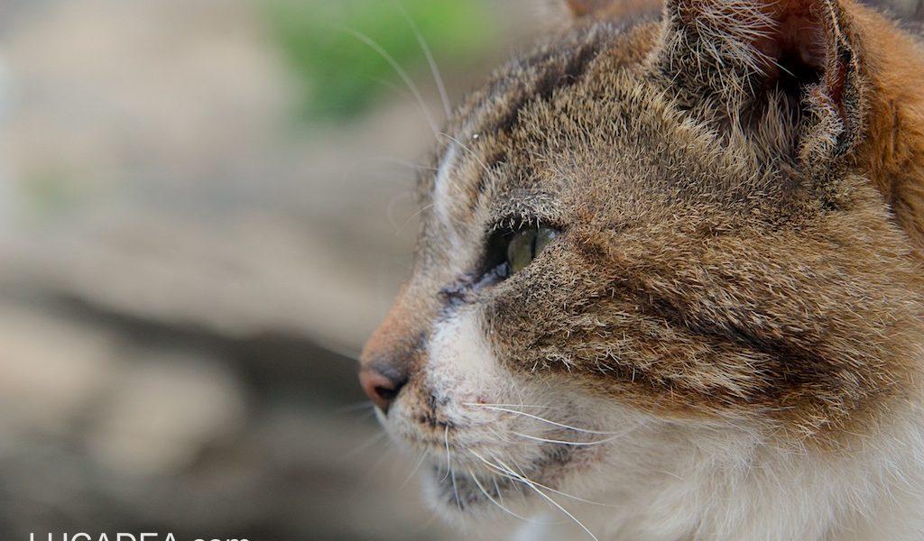Muso di un gatto