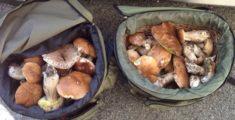 Caccia ai funghi