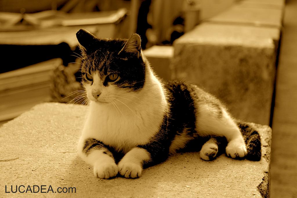 Gatto a Portobello (foto)
