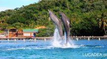 Delfini a Roatan (foto)