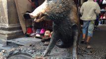 Florence wild pork (foto)