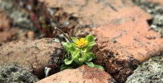 Fiore tra i mattoni (foto hdr)