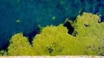 Alghe di fiume