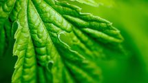 Una foglia verde