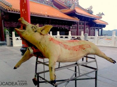 Pig in the temple
