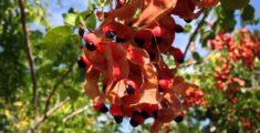 Piante e fiori caraibici