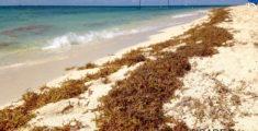 Alghe sulla spiaggia di Cozumel