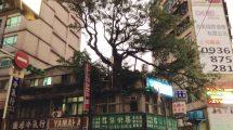 L'albero sulla casa