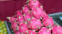 Frutto del drago: il dragon fruit asiatico dalla Thailandia