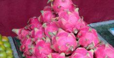 Frutto del drago: il dragon fruit asiatico dalla Thailandia