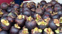 Mangostano, frutto esotico