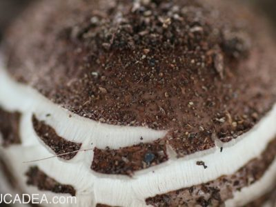 Funghi nelle aiuole